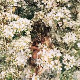 Mmoths (EP) Lyrics MMOTHS