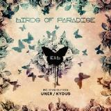 Birds Of Paradise Lyrics Eagles & Butterflies