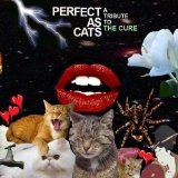 Cats Lyrics Various Artists